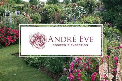 site e-commerce rose anciennes - Roses André